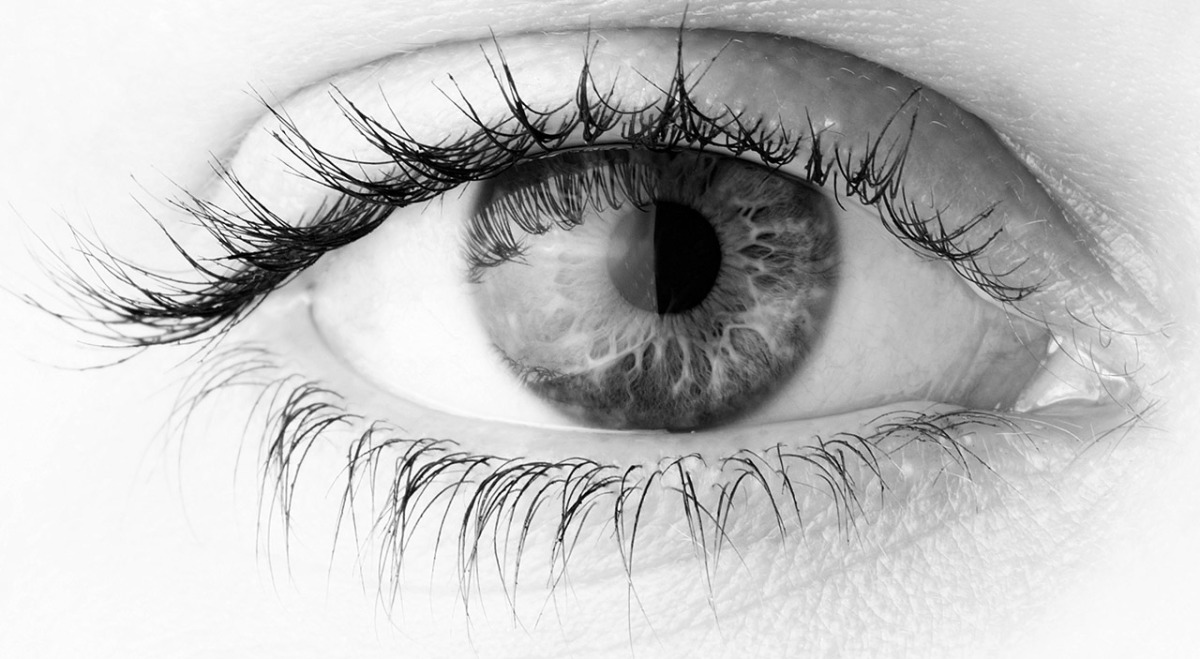 New neural pathway in eyes that aids in vision identified